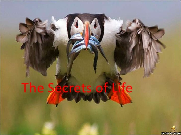 The Secrets of Life<br />
