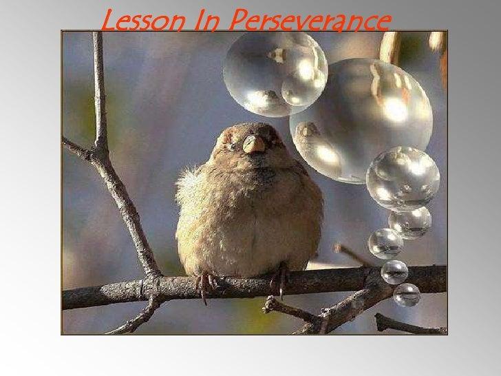 Lesson In Perseverance<br />