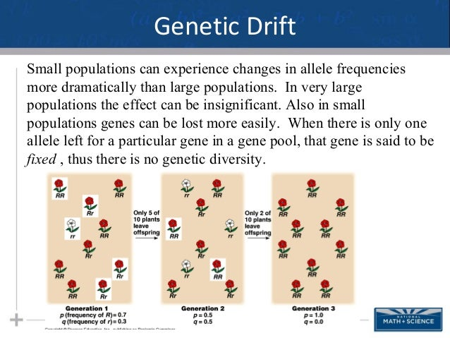 Compare And Contrast Natural Selection With Genetic Drift