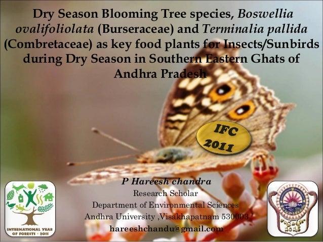 Dry Season Blooming Tree species, Boswellia  ovalifoliolata (Burseraceae) and Terminalia pallida(Combretaceae) as key food...