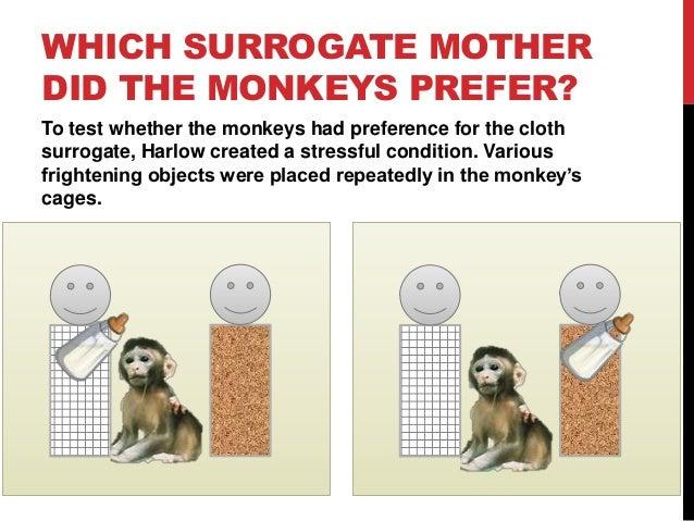 Contact comfort monkey study