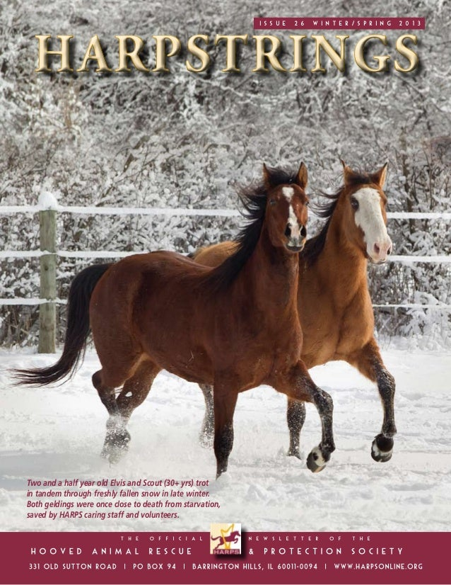 ISSUE   26   winter/SPRING   2013Two and a half year old Elvis and Scout (30+ yrs) trotin tandem through freshly fallen sn...