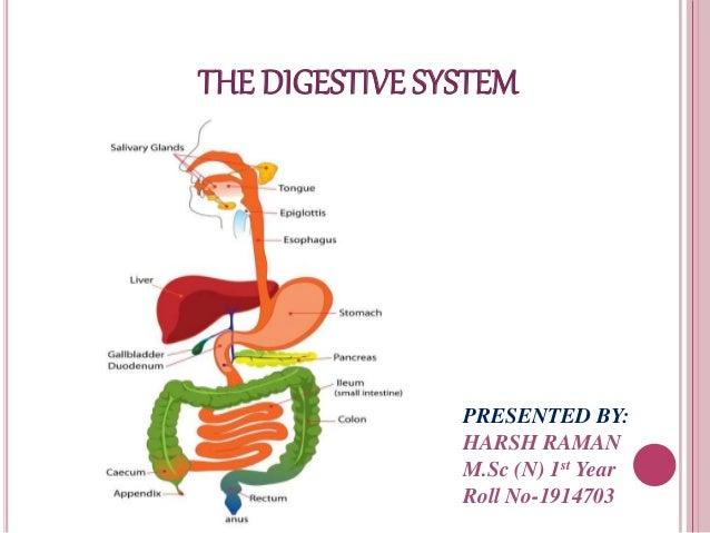 Anatomy of gi