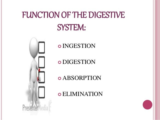 gastrointestinal system reports essays Read this essay on the journey through the digestive system come browse our large digital warehouse of free sample essays get the knowledge you need in order to.