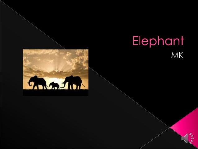 Hartman elephant