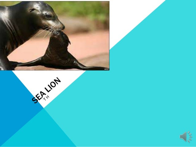 INTERESTING FACTSSea lions live in the north pole.Killer whale eat sea l ions .It has claws .They weight 5000 pounds .Have...