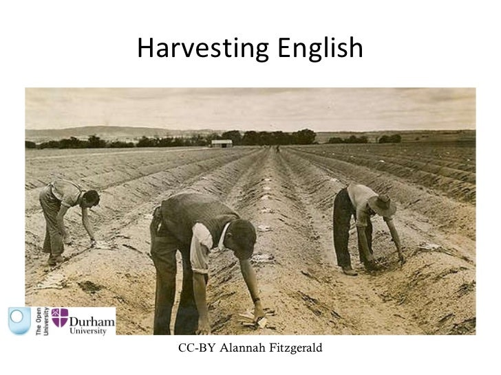 Harvesting English CC-BY  Alannah Fitzgerald