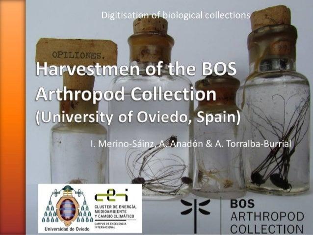 Harvestmen of BOS Arthropod Collection (University of Oviedo, Spain)