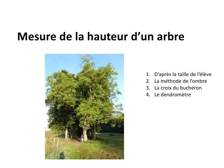 Mesure de la hauteur d'un arbre                       1.   D'après la taille de l'élève                       2.   La méth...