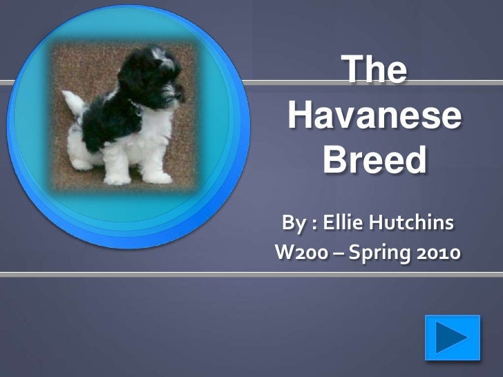 The  Havanese   Breed By : Ellie Hutchins W200 – Spring 2010
