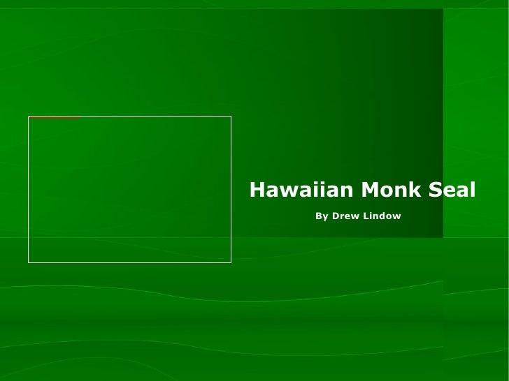 Hawaiian Monk Seal By Drew Lindow
