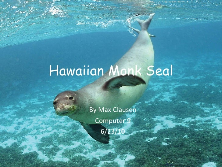 Hawaiian Monk Seal By Max Clausen Computer 9 6/23/10