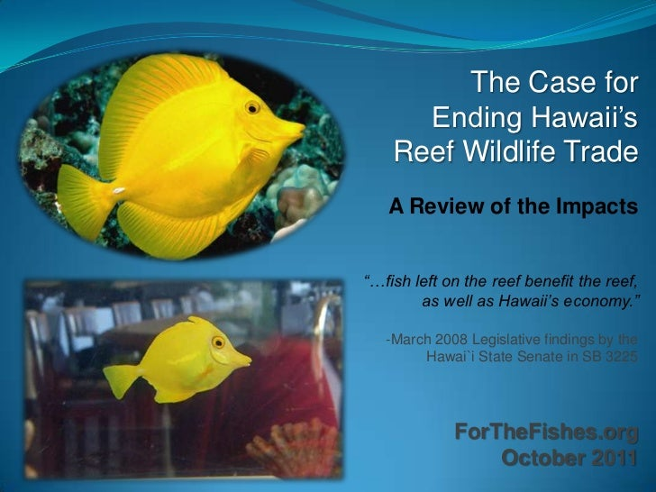 """The Case for      Ending Hawaii""""s    Reef Wildlife Trade   A Review of the Impacts""""…fish left on the reef benefit the reef..."""