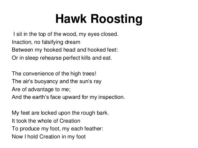 ted hughes s poem the hawk roosting Overview this is a great poem to use with 'work and play', as 'hawk roosting'  describes a very different, much bloodier, side of nature hughes was fascinated .