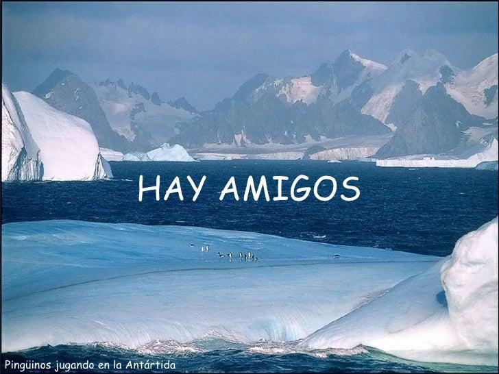 Pingüinos jugando en la Antártida HAY AMIGOS