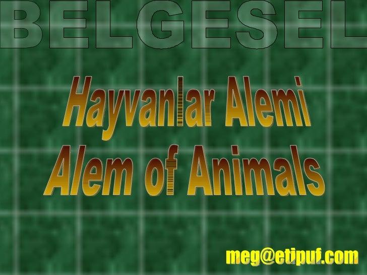 Hayvanlar Alemi  - Alem of Animals Belgesel
