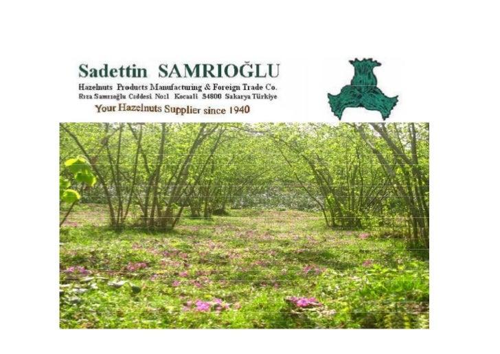 SAMRIOGLU eXPORT Hazelnuts types