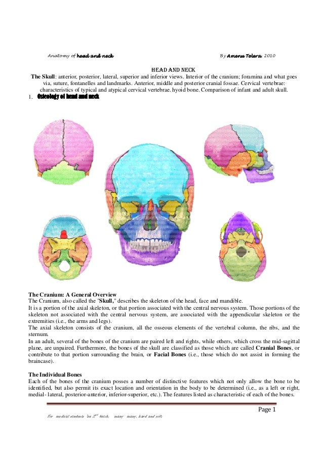 Anatomy of head and neck  By Amenu Tolera 2010 Tolera,  HEAD AND NECK The Skull: anterior, posterior, lateral, superior an...