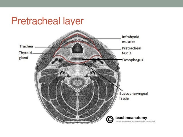 Ct anatomy head and neck