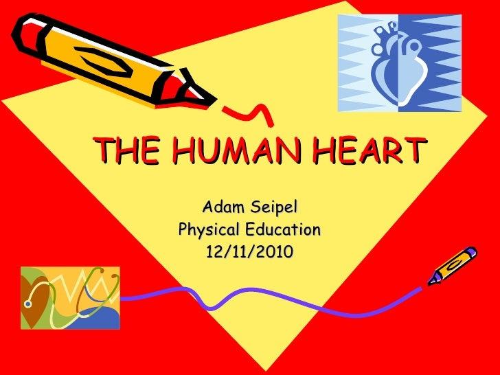 THE HUMAN HEART Adam Seipel Physical Education 12/11/2010