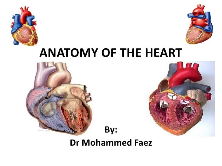 ANATOMY OF THE HEART<br />By:<br />Dr Mohammed Faez<br />