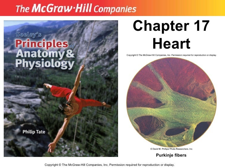 Copyright  ©  The McGraw-Hill Companies, Inc. Permission required for reproduction or display. Chapter 17 Heart Purkinje f...