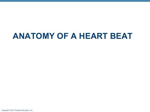 ANATOMY OF A HEART BEAT  Copyright © 2011 Pearson Education, Inc.