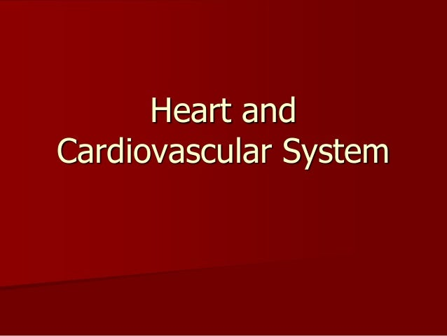 Heart and cardiovascular system