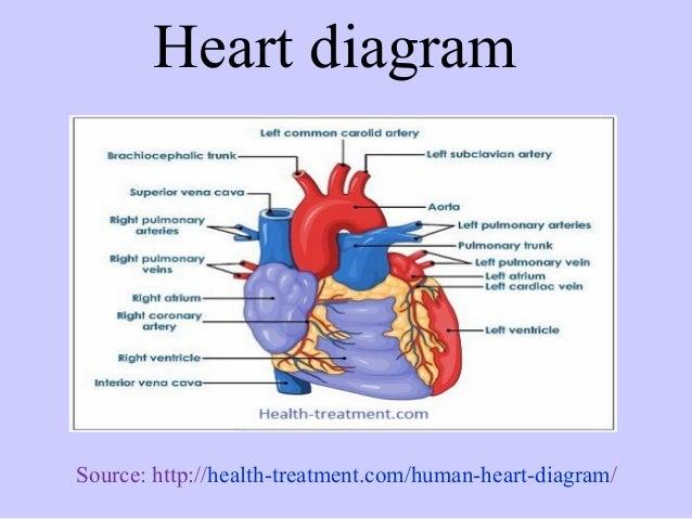 Healthy human heart diagram ccuart Choice Image