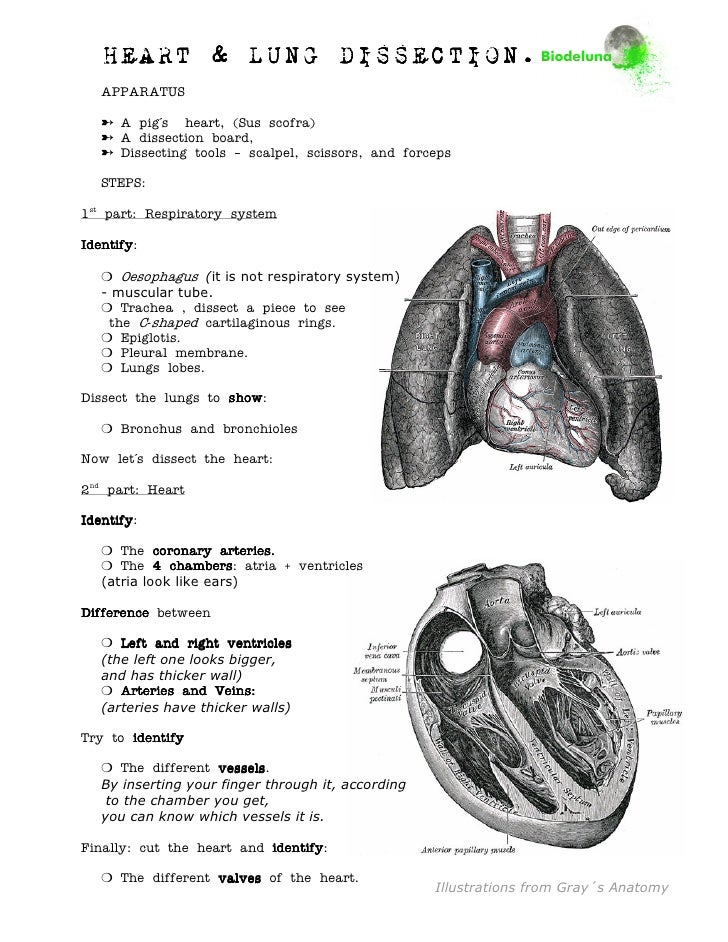 The Heart Lab Practical 2 Manual Guide