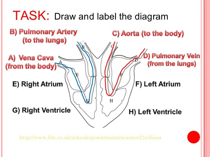 how to draw a diagram of heart