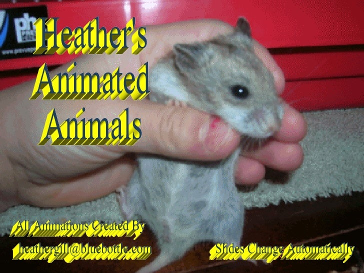 Heather's Animated Animals Slides Change Automatically [email_address] All Animations Created By