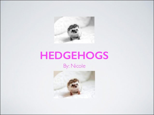HEDGEHOGS By: Nicole