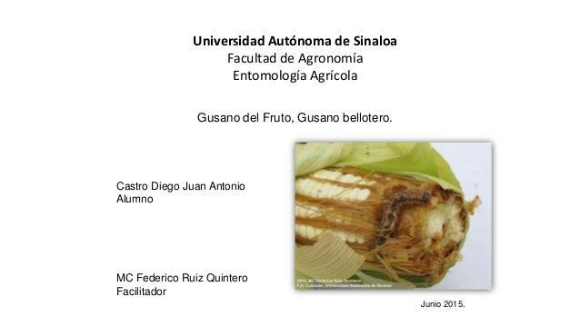 Universidad Autónoma de Sinaloa Facultad de Agronomía Entomología Agrícola Castro Diego Juan Antonio Alumno MC Federico Ru...