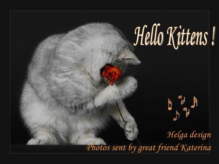 Hello Kittens