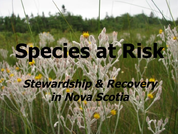 Species at Risk Stewardship & Recovery in Nova Scotia