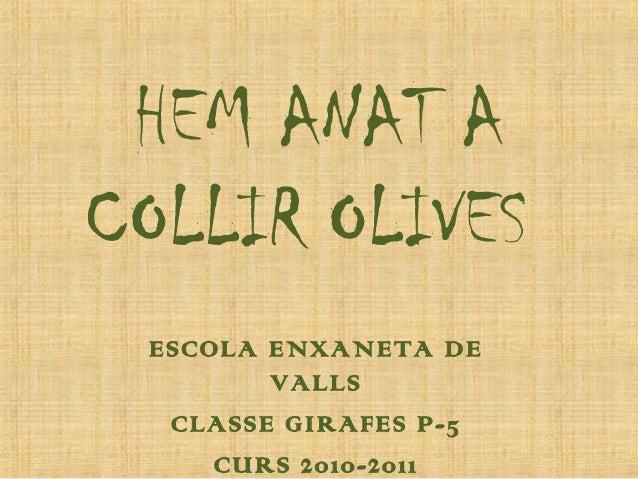 HEM ANAT A COLLIR OLIVES ESCOLA ENXANETA DE VALLS CLASSE GIRAFES P-5 CURS 2010-2011