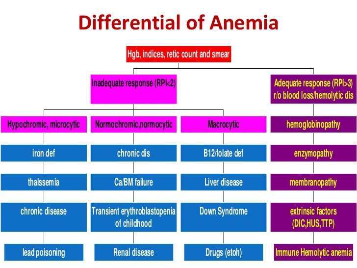 Introduction to Hematology and Anemia B12 Deficiency