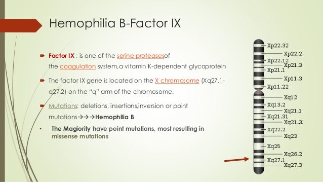 a summary of the hemophilia a genetic disorder Summary hemophilia b is a rare genetic bleeding disorder in which affected individuals have insufficient levels of a blood protein called factor ix factor ix is a clotting factor.