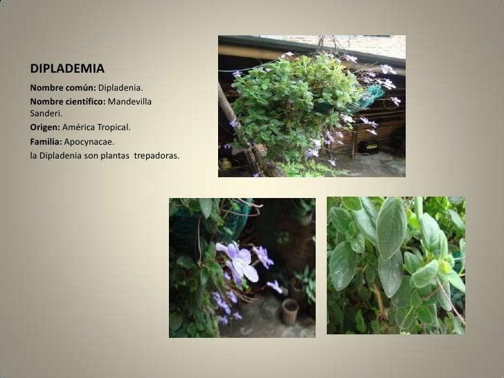 Herbario for Planta ornamental helecho nombre cientifico