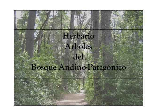 Herbario        Arboles          delBosque Andino-Patagónico