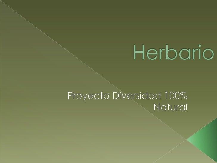 Herbario digital_ Marcelo, Sheila, Ronald, 4ºBD