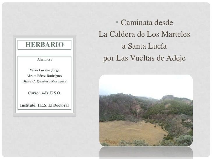 • Caminata desde                                La Caldera de Los Marteles   HERBARIO                            a Santa L...