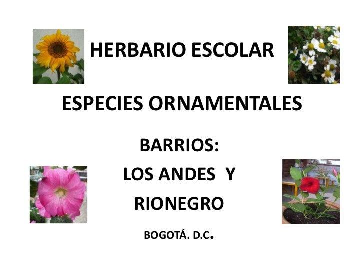HERBARIO ESCOLARESPECIES ORNAMENTALES       BARRIOS:     LOS ANDES Y      RIONEGRO       BOGOTÁ. D.C.
