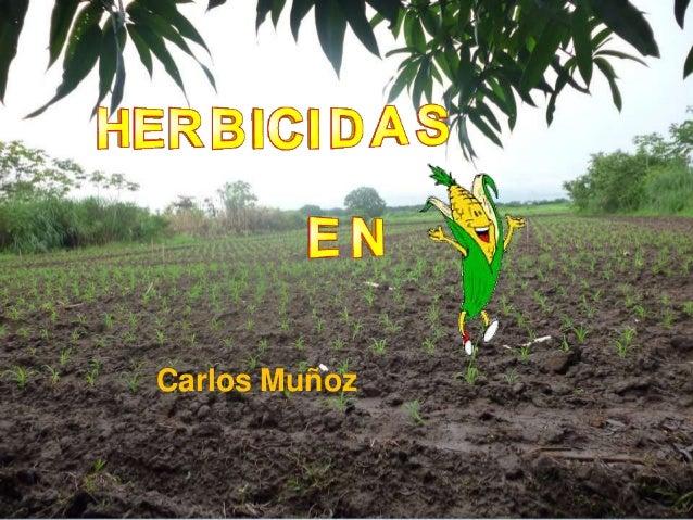Herbicidas en maíz