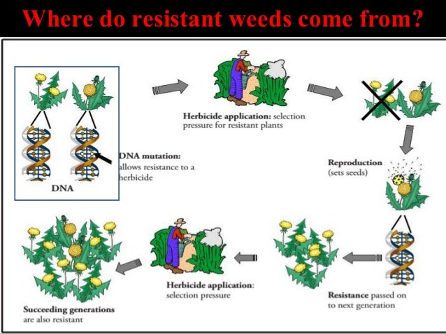 Herbicide Resistance In Weeds And Crops Basics
