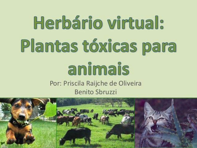 Herb rio virtual plantas t xicas para c es e gatos for Plantas toxicas gatos
