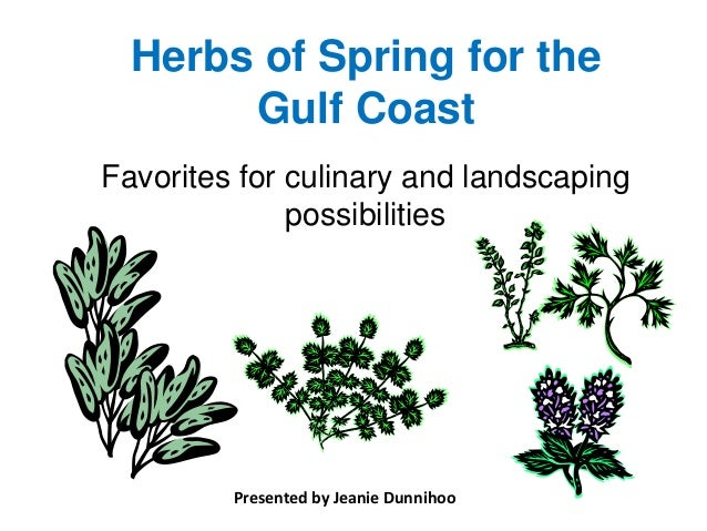 Herbs of Spring for the       Gulf CoastFavorites for culinary and landscaping              possibilities         Presente...