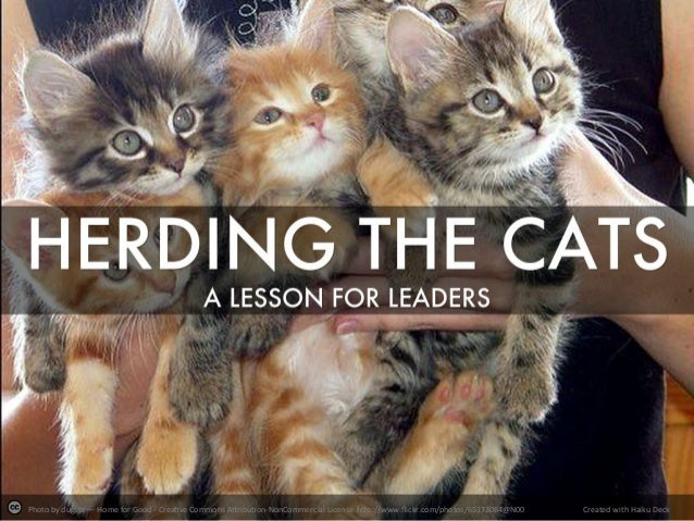 Herding the Cats: A Lesson for Leaders