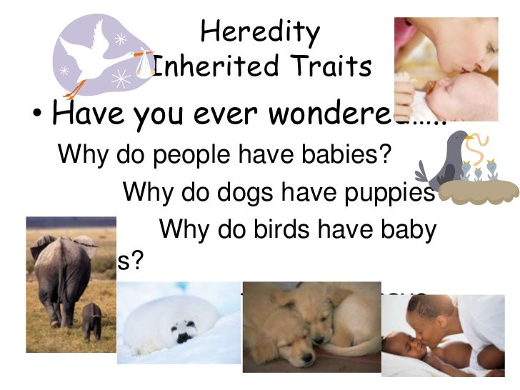 Heredity       Inherited Traits• Have you ever wondered….. Why do people have babies?      Why do dogs have puppies?      ...